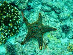 starfish-0312 (kasiahalka) Tags: animals beach espanolaisland galapagos galapagosislands gardnerbay mantaray nature ocean outdoor pacificocean sand schooloffish sealion sealions starfish travel water snorkeling eel