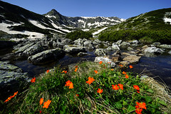 Spring in the mountain (J.u.l.i.u.s.) Tags: nature landscape landscapes lake water wasser snow sky flowers spring mountain explore inexplore