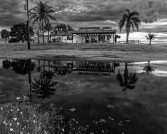 Jolly Gator Fish Camp & Grill (Ed Rosack) Tags: palm stjohnsriver highres tree olympus restaurant buildingandarchitecture hires centralflorida ©edrosack reflection flower usa florida geneva