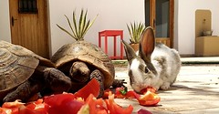 In my garden (Panoussiadis.) Tags: tortue lapin