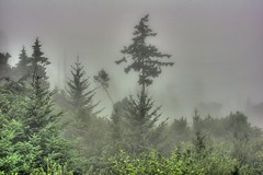 FogTrees Halo (David K. Edwards) Tags: foliage forest underbrush tree fog mist ocean northsaanich sidney vancouverisland britishcolumbia canada foghorn halo hdr
