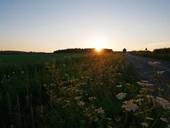sunset (auroradawn61) Tags: dorset uk england sunday may 2018 bankholidayweekend countryside lumixgx80 road sunset flowers gussageallsaints