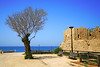 Picturesque tree on the archeological site, Caesarea, Israel