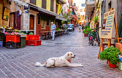 Chania, Crete (Kevin R Thornton) Tags: d90 crete travel street dog city greece nikon mediterranean chania animal creteregion gr