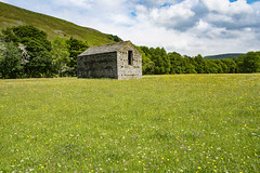 Wild Flowers in Muker, North Yorkshire (Kingsley_Allison) Tags: wildflowers muker yorkshiredales yorkshire nikon northyorkshire nikond7200 nature nationalpark uk meadows buttercups walks walkingboots keld stone barns