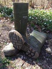 Classic green Dunlop Purofort (Noraboots1) Tags: dunlop dunlops purofort wellies gummistiefel gummistøvler rubber boots workwear arbejdstøj workboots