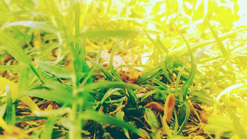 #Photography 📷 #Love ❤ #Grass #garden . . . . . #perfect #click #kurukshetra #diaries #tb #memories #pinterest #photogram #photographer #photographylife #photographerlife #shot #haveaniceday #instashot #camera #hdr #goodday #lovephotography #