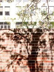 Wall (Referenceace - Working!) Tags: 45mm cincinnati micro43 ohio panasoniclumixg5 wall plch readinggarden garden