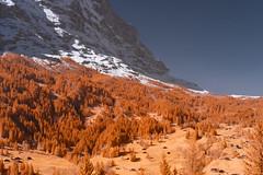 Grindelwald (Edd Noble) Tags: grindelwald switzerland sonya7 zeiss55mmf18 infrared infraredphotography