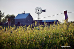 Evening Farm_187604 (rjmonner) Tags: fence posts farm farming eveninglight rural agriculture agricultural grasses barbedwire windmill barn country backroad isolated cupola blades iowa westernskiesbyway agronomy field pasture midwest cornbelt focus shed growing growingseason