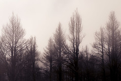Cenizas entre nieblas (Antonio Margalef) Tags: incendio nieblas
