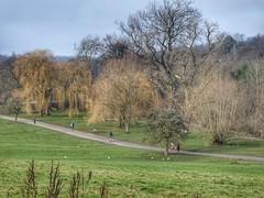Hampstead Heath, London, England (PaChambers) Tags: hampstead heath hampsteadheath london park green uk england urban winter 2018