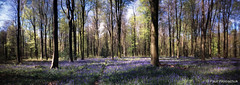 201805_38_01 (Paul Woloschuk) Tags: pinhole pinholephotography film bluebells woodland wiltshire woods panorama