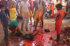 Animal Sacrifice and Goddess Worship (firoze shakir photographerno1) Tags: marriammenfeast2018 madraswadi worli shanmugham streetphotography hinduism shotbyfirozeshakir karumarriammen