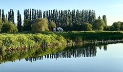 Views from a narrow boat (gina.nicole.tesloff) Tags: horse coloured river boat british uk reflection ripple green blue riverbank pattern sun summer warm afternoon