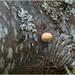 old log and mushroom