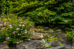 Rocky Scene (Snapping Beauty) Tags: 2018 publicpark spring natural foliage nature abstract day vibrantcolor seasons background beautyinnature garden leaves nopeople peace scenery virginia clean landscape photography stills colors green years horizontal places organic esp