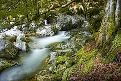 Soca forest valley (memories-in-motion) Tags: soca forest valley green tree whitewater white stones rock nature mood balance flow slovenia branch slo landscape canoneos5dmarkiv tse24mmf35lii tilt shift beech old moss