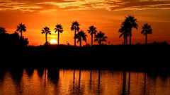 Sunset orange (.Guillermo.) Tags: cielo sky sunset sun sol atardecer puestadesol playa beach lago lake palmeras palms landscapes landscape paisaje paisajes