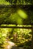 toukeiji temple (N.sino) Tags: m9 summilux50mm kamakura kitakamakura toukeiji temple weed 鎌倉 北鎌倉 東慶寺 門 書院 雑草 木漏れ日