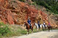 (Enllasez - Enric LLaó) Tags: montseny cavalls caballos 2018 paissatge paisaje