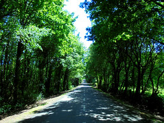 On the road again (Xolois) Tags: trees road green asfalt forest summer spain spring wood sky plant galicia