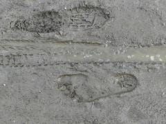 Human print! (Barefoot Adventurer) Tags: barefoot barefooting barefoothiking barefooter barefeet barefooted baresoles barfuss footprint muddyfeet muddysoles muddy mud footprints