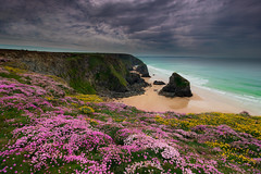 Colour on the cliffs (snowyturner) Tags: cornwall thrift vetch cliffs bedruthan padstow newquay 750d flowers ocean beach