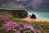 Colour on the cliffs (snowyturner) Tags: cornwall thrift vetch cliffs bedruthan padstow newquay 750d flowers ocean beach