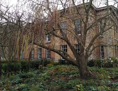 Downing College, Cambridge (facebook.com/marina.partsevskaya) Tags: universityofcambridge downingcollege cambridge building tree landscape greenspace backyards heonggallery england