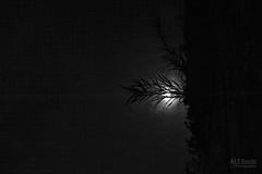 (ale_brando) Tags: moon luna light monlit sky nikonfx night nightphotography blackwhite blackandwhite d700 fx silverefexpro niksoftware mono monochrome moonlight