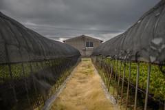 Mesh type. (Yasuyuki Oomagari) Tags: greenhouse vinylhouse mesh black agriculture vegetable perspective rural house country countryside light cloud farm nikon d810 zeiss distagont1435 japan kyushu fukuoka landscape 日本 九州 農業 農家 風景写真