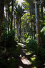 Walking in a dream (boze610 [ GRocca Photo ] ( travel and nature )) Tags: forest foresta rainforest nuovazelanda westcoast newzealand palms fern ocean oceanside hike hiking greatwalks heaphy track sunlight naturalmente natura nature naturallight lucenaturale nationalpark naturalcolors natureworld greatphotographers groccaphoto dream flickrtravelaward beautiful backpacking wild trekking longwalk amazing scenery trees alberi escursionismo escursioni