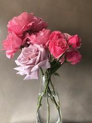 Rosas (Luz D. Montero Espuela. 3.5 million visits. Thanks) Tags: rosas roses luzdmonteroespuela iphonex flower flowers microcemento