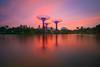 Three Tower (Chye Guan, Tan) Tags: gardenbythebay garden gardencity gbtb sunrise supertree waterscape reflection landscape epicsky epic flowerdome skyline singapore singaporescape longexposure
