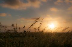 Posta Sol (faltimiras) Tags: denmark dinamarca jutland ribe lake sikeborg