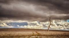 Dead Tree Hill (Struan Timms Photography) Tags: juneephotographer junee juneeshire struantimmsphotography storm nikon nikhdreffex nikcollection nikond750 landscape clouds stormfront stormscape weather rain 70210 f4556