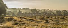 Freshly cut grass at Sunrise (LindaShaws Images) Tags: village staffordshire hay grass mow lines colours golds glow sunrise mist haze june warm outdoors farming crop cut