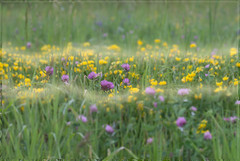 162 Field - Flowers - Fog - Frame