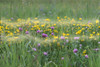 162 Field - Flowers - Fog - Frame (Robin Penrose - Canadian eh?) Tags: 201806 ps6 layers frame project365 365the2018edition flowers weeds field roadside