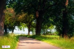 Buurtschap Nietap Drenthe (Reina Smallenbroek) Tags: reinasmallenbroek drenthe nietap landschap landscape woods trees bos bomen pad path canonnederland onlanden