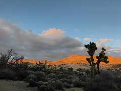 IMG_2822 (emilie raguso) Tags: joshuatree california cali socal southerncalifornia hiking nature nationalpark