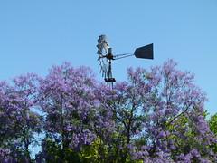 windmill & jacarandas (Jef Poskanzer) Tags: windmill jacaranda flowers aermotor emmapruschfarm geotagged geo:lat=3734060 geo:lon=12184550 t