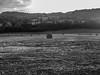 Alone (pamelay.photography) Tags: nature free sky dark alone sad tuscany
