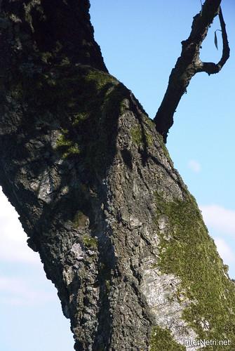 Шацький Національний Природний Парк Озеро Пісочне Стовбури дерев InterNetri  Ukraine 378
