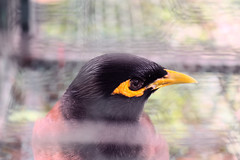 Within the Cage (khachieu2) Tags: bird cage animal closeup close portrait fur eyes head wildlife animals birds