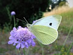 Butterfly 1678 (+1200000 views!) Tags: butterfly borboleta farfalla mariposa papillon schmetterling فراشة