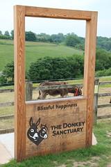 Donkey Photo Frame (Luna-Woona Moon) Tags: donkeys rescue animals equine devon england