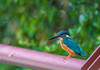 Kingfisher (Changer4Ever) Tags: nikon d750 150600mm bird animal life nature outdoor color bokeh dof depthoffield feather wildlife 150600mmf5063