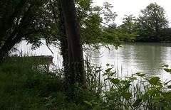 Bords de Marne au hameau d'Aulnoy (Essômes-sur-Marne) (photopoésie) Tags: aulnoy essômessurmarne